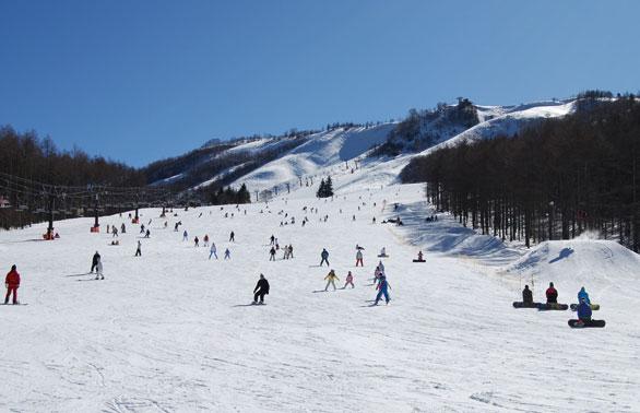 いい雪あります! 白樺高原 15秒CM #スキー #スノボ #雪質最高